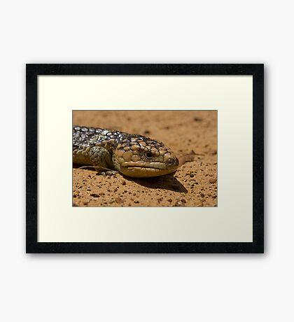 Lizard in the Outback Framed Print