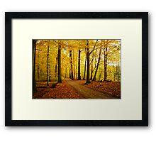 Autumn strikes Framed Print