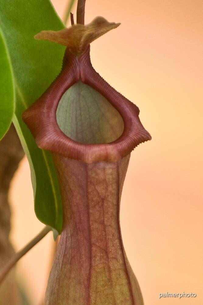 Catcher Plant by palmerphoto