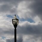 light on a cloudy day by David Donio