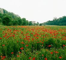 Poppy Field, Lake Guarda, Italy by Lisa Wilson