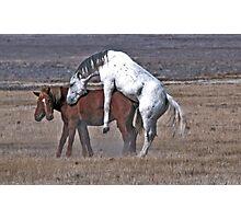 Happy Mustangs Photographic Print