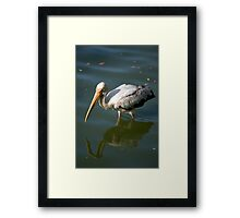 Bird walking through water Framed Print