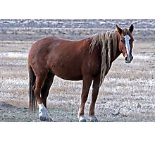 Wise Mustang Photographic Print