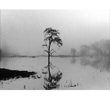 Solitary Photographic Print