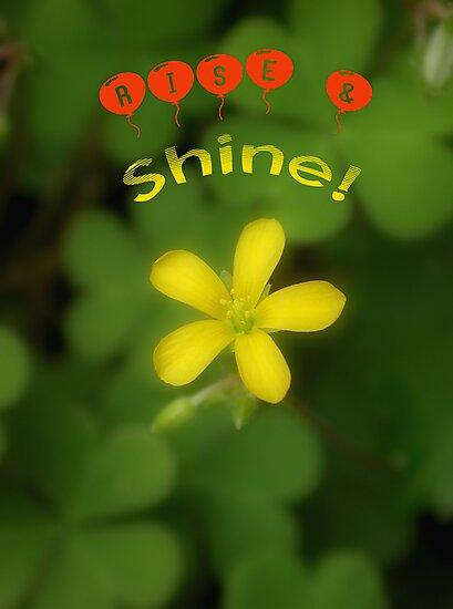 Rise & Shine! by MMerritt