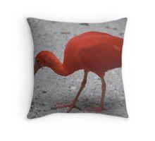 Crimson Ibis Throw Pillow
