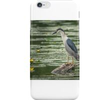 black-crowned night heron iPhone Case/Skin
