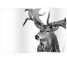 Red Deer - Portrait Poster