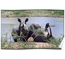 Rhino Mother with Calf Poster