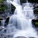 Leura Cascades - Blue Mountains, NSW, Australia by Gayle Shaw