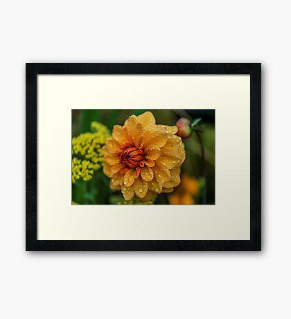 Dahlia Orange Flame Framed Print