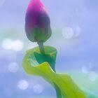 Lotus #90 by Janos Sison