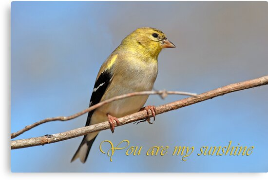 You are my sunshine  by Bonnie T.  Barry