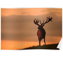 Red Deer At Night - Photographers Delight Poster