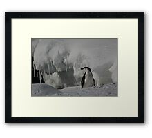 Antarctic Penguin Framed Print