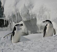 Penguin in pairs by Carolyn Ng