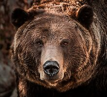 Grizzly Bear Close-Up by George Wheelhouse