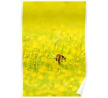 Pheasant In The Buttercup Meadow Poster