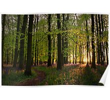 Pathway Through Sunset Bluebell Woods Poster