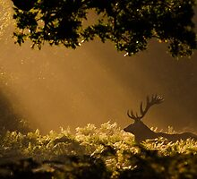 Red Deer - Sunrise Among Ferns by George Wheelhouse