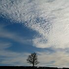 Lone tree by JUDI2008