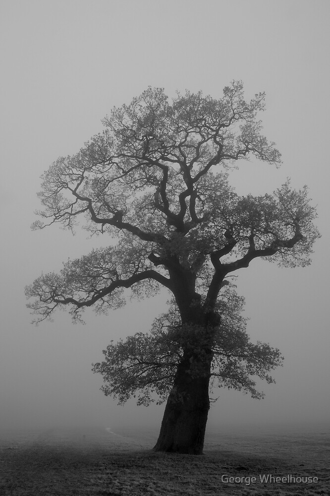 Back-lit Tree in Fog by George Wheelhouse