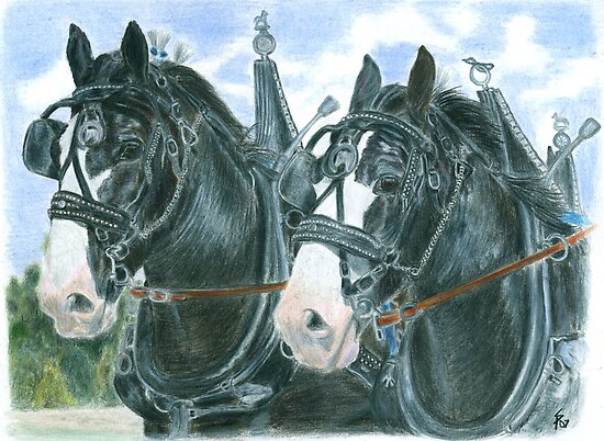 Horse team by Petportraits