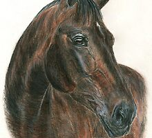 Thoroughbred stallion - head study by Petportraits