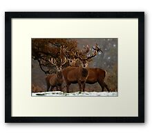 Family Portrait - Red Deer Framed Print
