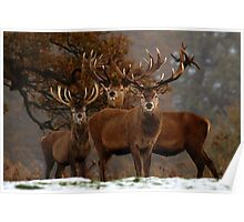 Family Portrait - Red Deer Poster