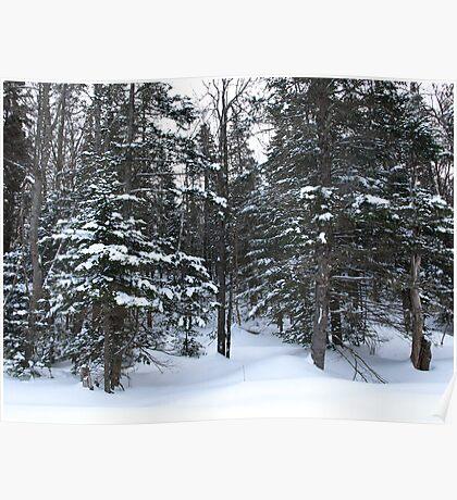 NC  Winter wonderland Poster