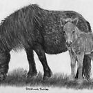 Shetland ponies - mare and foal by Petportraits