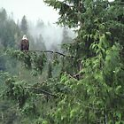 Alaskan Eagle by pwall