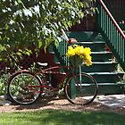Bikebasket Flowers by Jim Caldwell