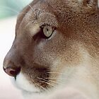 Cougar by pwall
