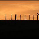Waiting... by Chris Coetzee