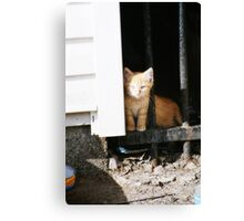 The Kittens: Take Me Home Canvas Print