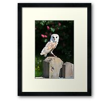 Barn owl on a fence post Framed Print