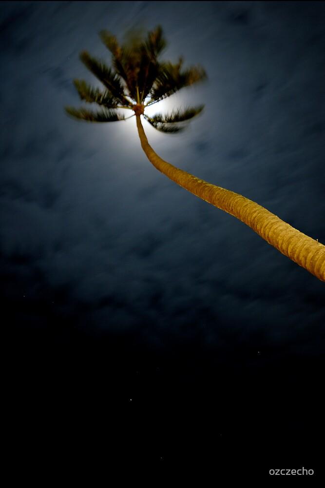 Palm in the wind by ozczecho