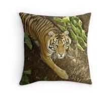 Sumatran Tigress. Throw Pillow