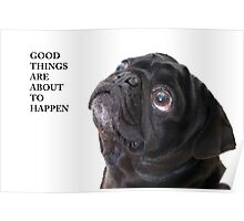 Good things black pug Poster