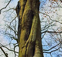 Twisted tree trunk by Avril Harris