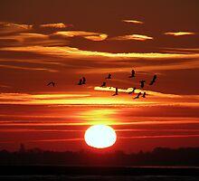 Sunrise 3 09-02-08 by Sharon Perrett