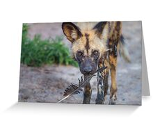 Wild Dog's Prized Feather Greeting Card