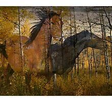 Phantom Grove Photographic Print