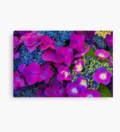 Streptocarpus Purple and Blue Bouquet  Canvas Print