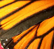 Wing of a Monarch by margotk