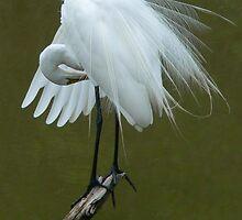 Great Egret   by Rosalie Scanlon