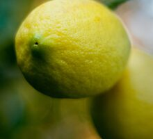 Just a Lemon by DavidsArt